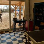Therapeutic dog grooming service Hampshire