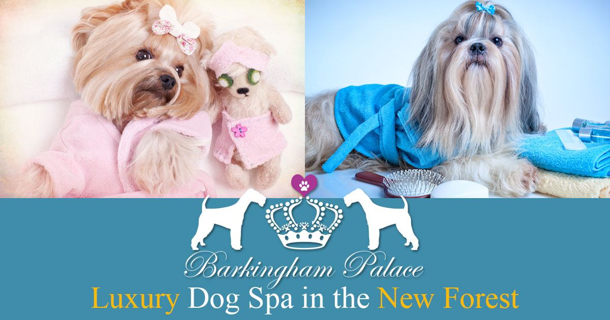 Mobile Dog Grooming New Hampshire