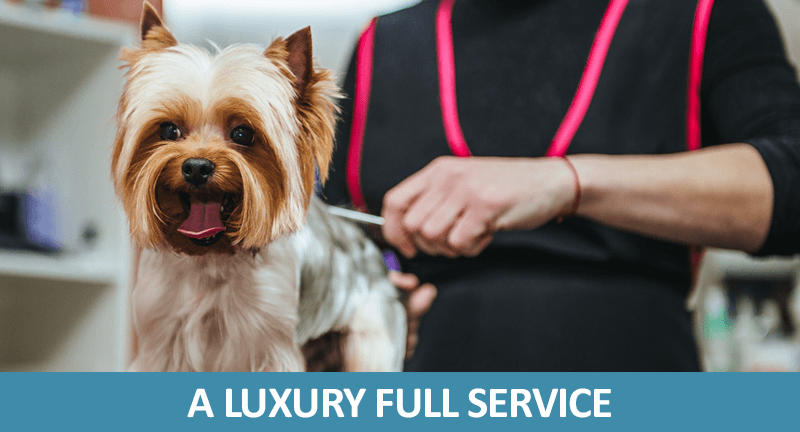 Luxury Dog Grooming Treatments Barkingham Palace Hampshire